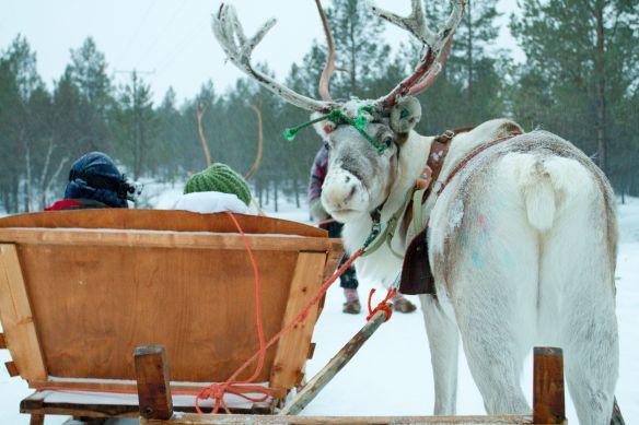 reindeer-sleigh-ride Lapland